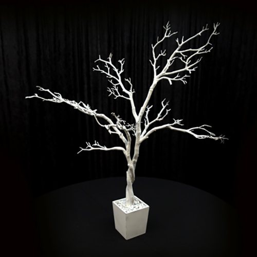 4 ft White Manzanita Tree Image